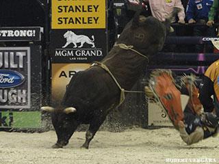 bull-nose-dive_BP